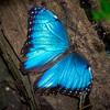 Butterfly Jungle - 22 Mar 2018