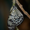 Paper Kite at Butterfly Jungle - 4 Apr 2014
