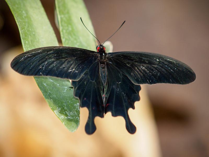 Butterfly Jungle - 15 Mar 2013