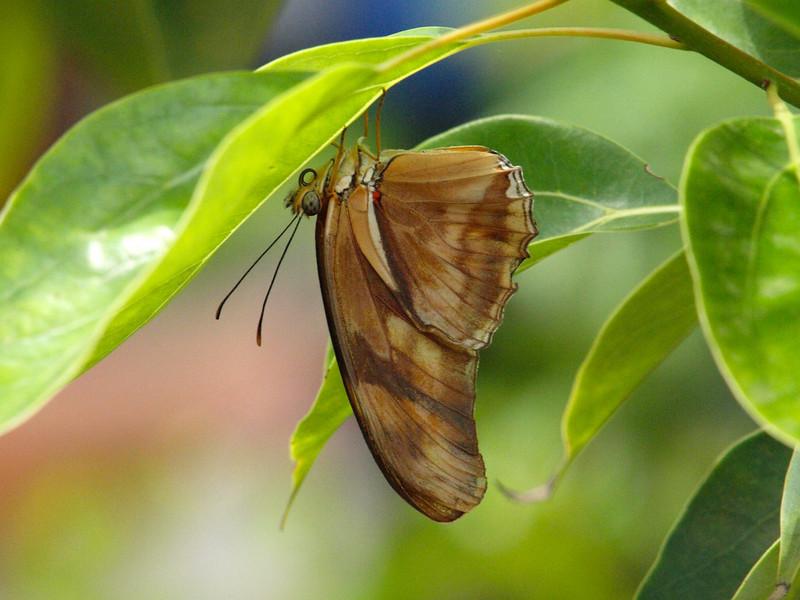 Julia at Butterfly Jungle - 24 Apr 2010