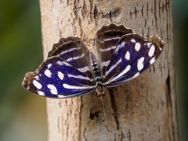 Butterfly Jungle - 5 Apr 2015