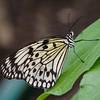 Butterfly Jungle - 24 Apr 2014
