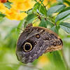 Springs Preserve Butterfly Habitat - 6 May 2016