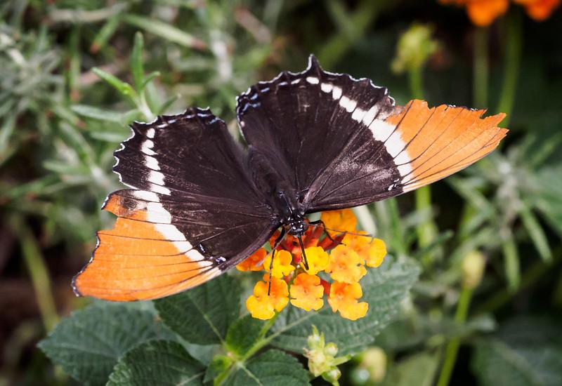 Springs Preserve Butterfly Habitat - 14 Oct 2016