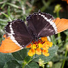 Springs Preserve Butterfly Habitat - 14 Oct 2016
