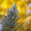 Texas Discovery Gardens - 29 Nov 2012