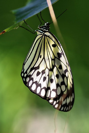 Butterfly Farm Grand Cayman