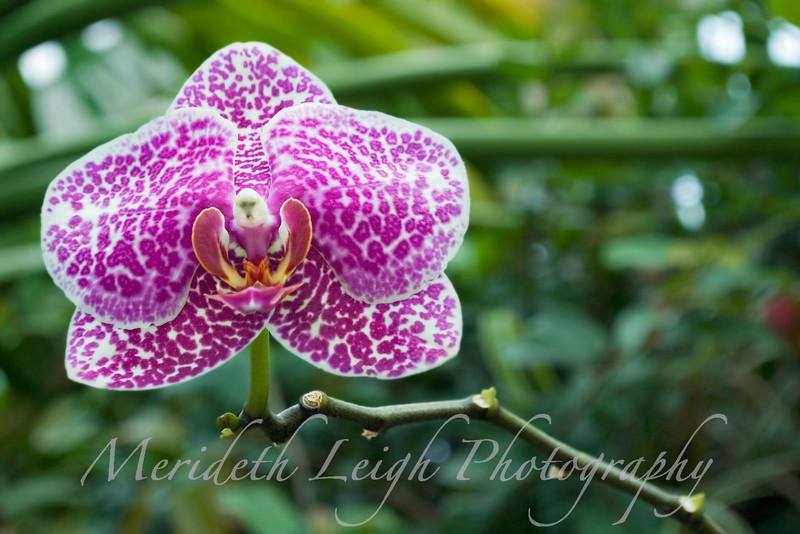 orchid stem