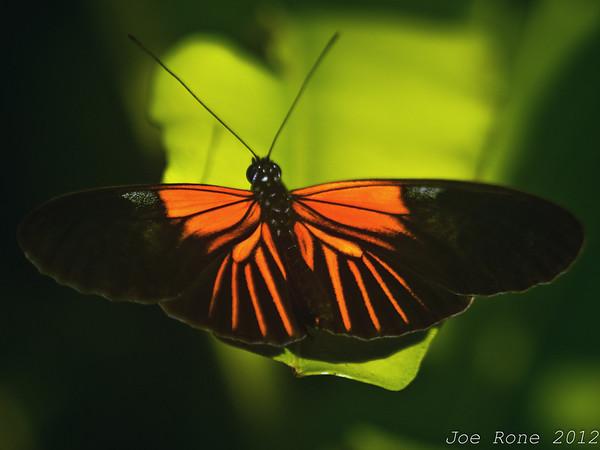 Butterfly House 26Feb2012