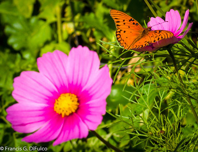 butterfly january 2013