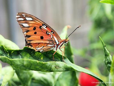 Butterfly november 2013