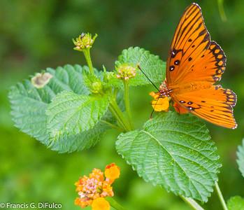 butterfly november 2015