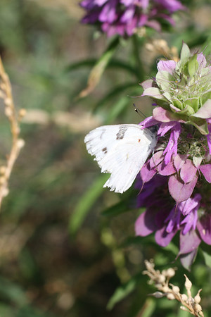 Butterflies 2010
