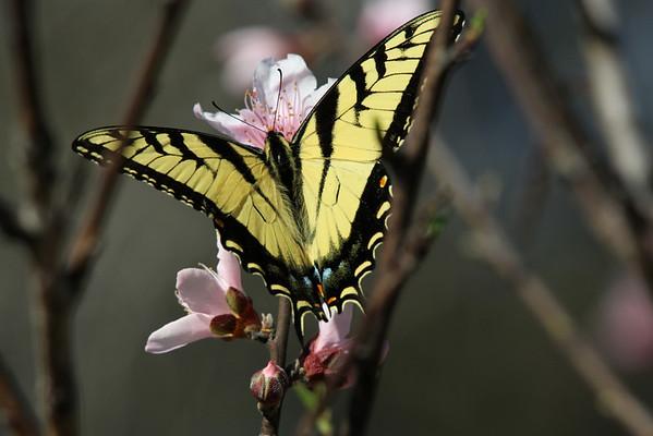 Butterflies-2011