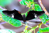 Butterfly_HDZoo_DON1721
