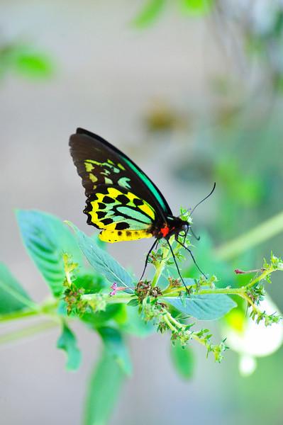 Butterfly_HDZoo_DDD2140