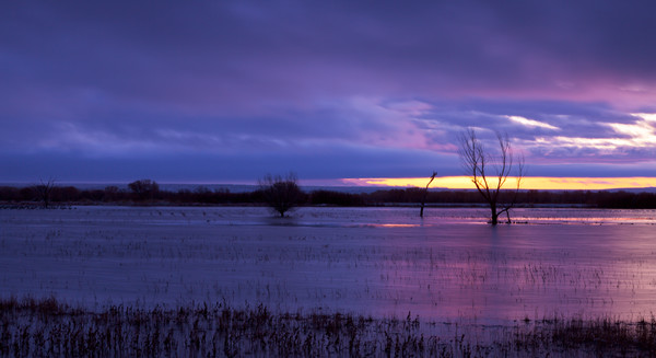 Predawn Purple II