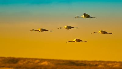 Cranes Arriving