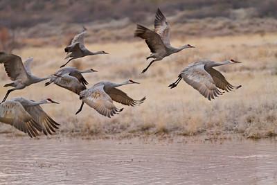 Cranes Departing