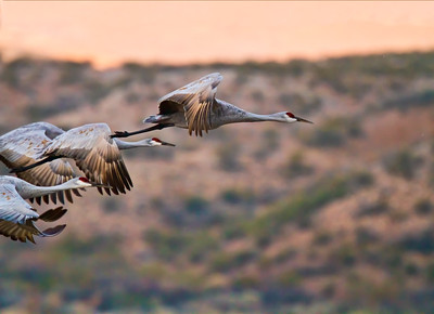 Staggered Cranes