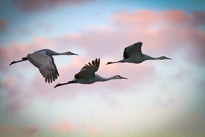 Pastel Flyers