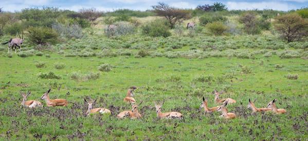 Deception Valley, Central Kalahari, Botswana, 2008