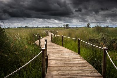 Okavango Delta, Botswana, 2008