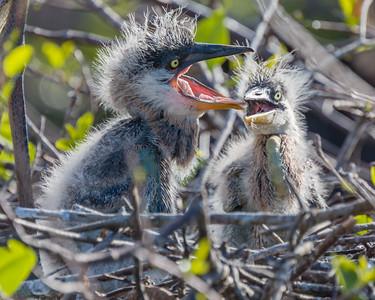 Nest Mates