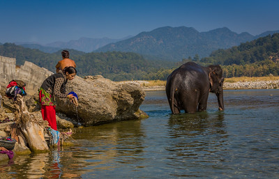 Corbett National Park, India, 2014