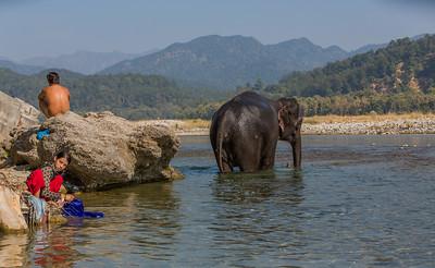Corbett National Park, India, 2014