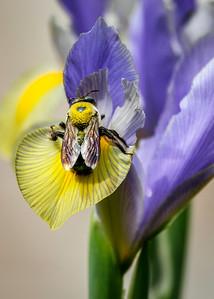 Pollen Halo