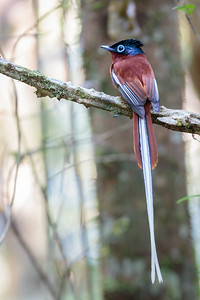 Andasibe National Park, Madagascar