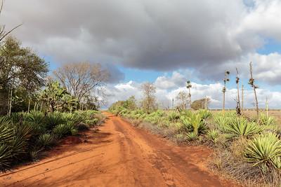 Berenty Reserve, Madagascar