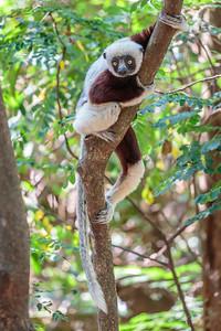 Ankarafantsika National Park, Madagascar