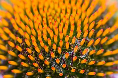 Pollen Rich
