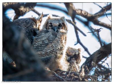 Peeking Out, Feb 28, 2013 Quail Creek, BJNCP, Southlake Texas, 2013