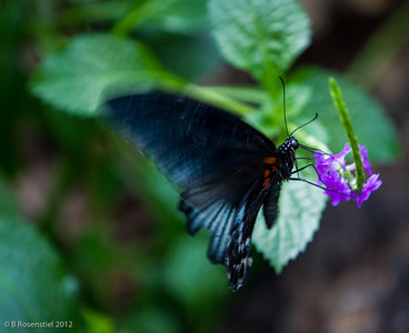Butterflies in the Garden, Fort Worth, Texas, 2012