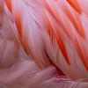 Flamingo II, Ft. Worth Zoo, 2010