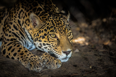 Fort Worth Zoo, Fort Worth, Texas, 2015