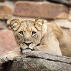 Fort Worth Zoo, Forth Worth, Texas, 2017