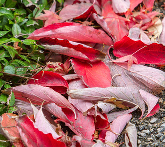 Downed Leaves