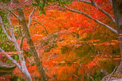 Fall Reflection III