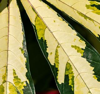 Shades of Green, FW Botanic Garden, 2009
