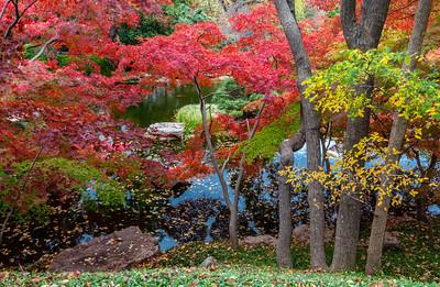 Fort Worth Botanic Gardens, TX, November, 2010