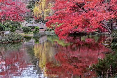 Japanese Garden, Fort Worth Botanic Gardens, TX, 2009