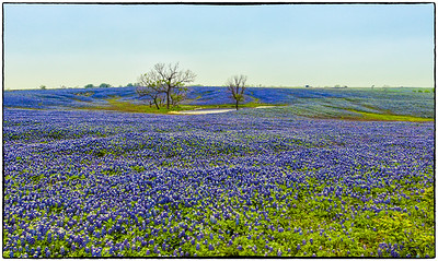 Bluebonnet Trail, Ennis, Texas, March, 2012