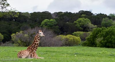 Fossil Rim Wildlife Park, Texas, March, 2012