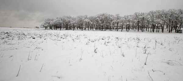 Tree Copse in Snow