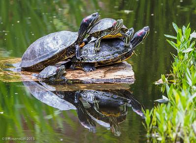 Pile On Lady Bird Johnson Wildflower Center, Austin, TX, 2013
