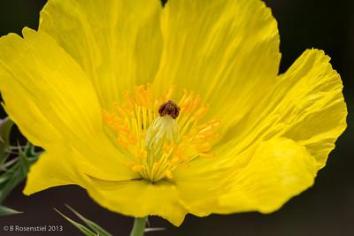 Shades of Yellow Lady Bird Johnson Wildflower Center, Austin, TX, 2013